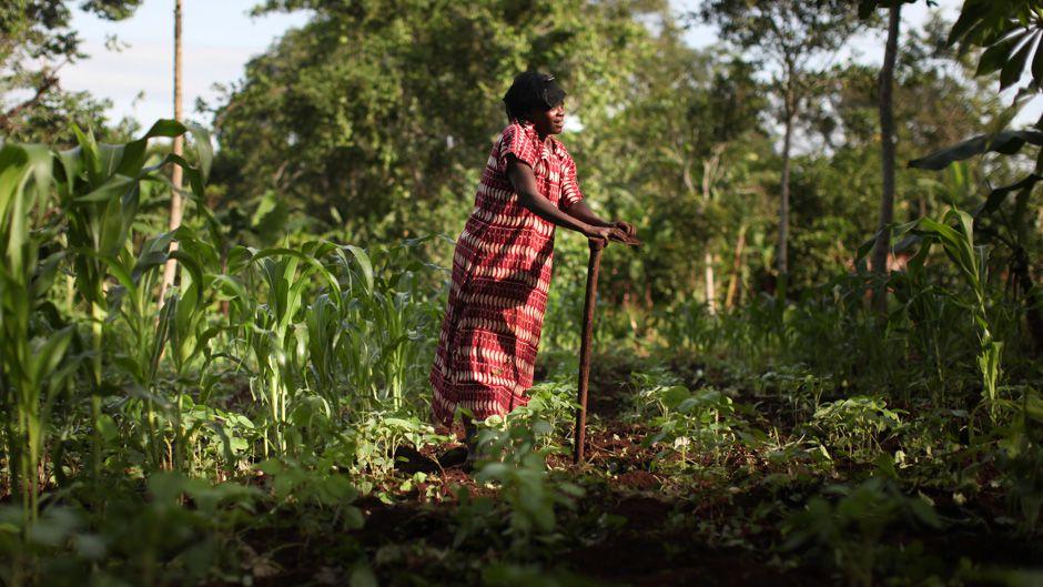 regenerative farming indigenous-and-tk